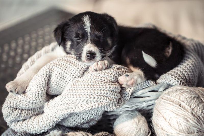 https: img.okezone.com content 2020 10 16 612 2294527 punya-anak-anjing-baru-yuk-latih-dengan-5-cara-ini-di-rumah-SpBEi7cSxv.jpg
