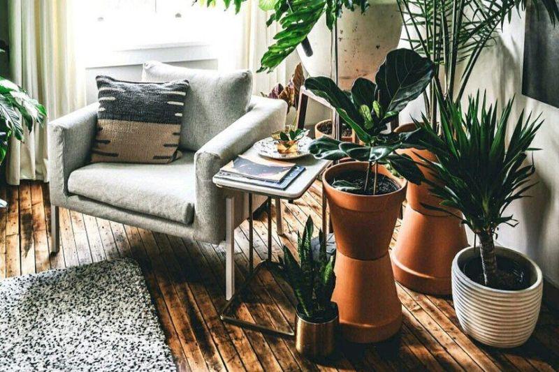 https: img.okezone.com content 2020 10 16 612 2294599 4-tanaman-indoor-yang-lagi-naik-daun-selama-psbb-0alZE4pXlK.jpg
