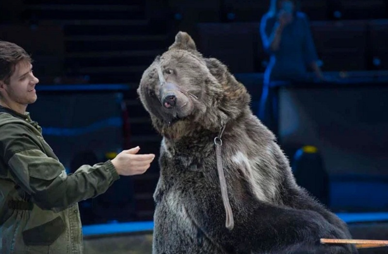 https: img.okezone.com content 2020 10 17 18 2295181 lupa-lepas-masker-saat-masuk-kandang-pawang-tewas-diganyang-beruang-7ERPhNxpDQ.jpg
