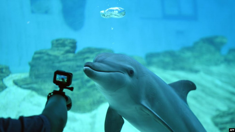https: img.okezone.com content 2020 10 18 16 2295419 perusahaan-ini-bikin-robot-mirip-hewan-asli-untuk-taman-wisata-2dQofLoccE.jpg