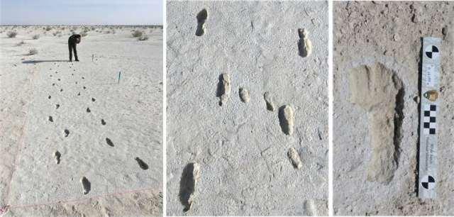 Ditemukan Fosil Jejak Kaki Terpanjang dari Zaman E