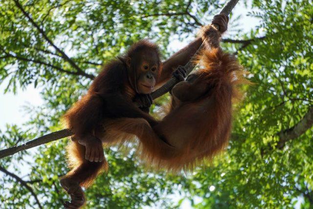 https: img.okezone.com content 2020 10 20 16 2296876 hewan-hewan-langka-ini-cuma-ada-di-indonesia-yuk-simak-AjnmYPiBG5.jpg