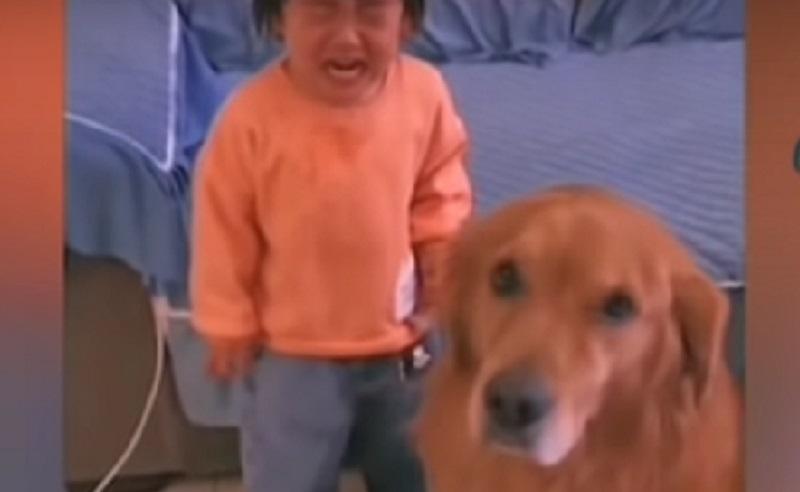 https: img.okezone.com content 2020 10 20 612 2296833 aksi-seekor-anjing-lindungi-anak-kecil-saat-dimarahi-ibunya-Xl8rOqaY0F.jpg