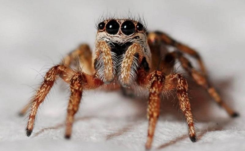 https: img.okezone.com content 2020 10 20 612 2296861 viral-laba-laba-raksasa-bentuknya-seperti-aragog-di-serial-harry-potter-q2m8VSdKwY.jpg