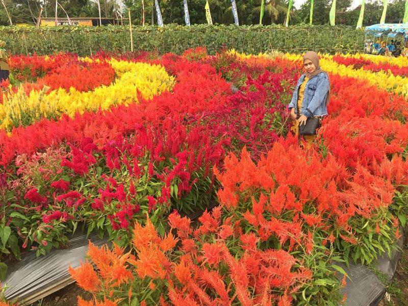https: img.okezone.com content 2020 10 22 408 2297782 agrowisata-instagramable-di-lereng-gunung-lawu-suguhkan-warna-warni-bunga-cv8F02Gn56.jpg