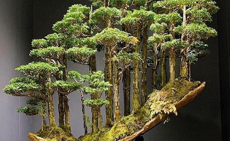 https: img.okezone.com content 2020 10 22 612 2297731 begini-penampakan-hutan-bonsai-terindah-HAyWSeYL2U.jpg