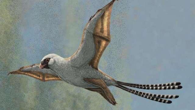 https: img.okezone.com content 2020 10 23 16 2298235 punya-sayap-dinosaurus-ini-justru-tidak-mampu-terbang-bskEIdL0JC.jpg