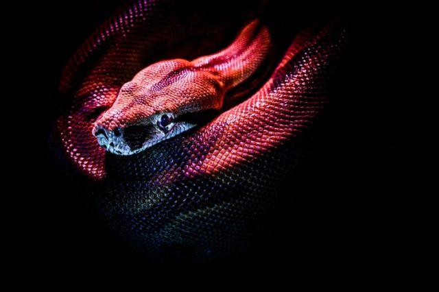 https: img.okezone.com content 2020 10 23 16 2298404 studi-baru-ungkap-ular-bisa-melihat-dengan-baik-di-keadaan-gelap-total-BNdAPKzhyT.jpg
