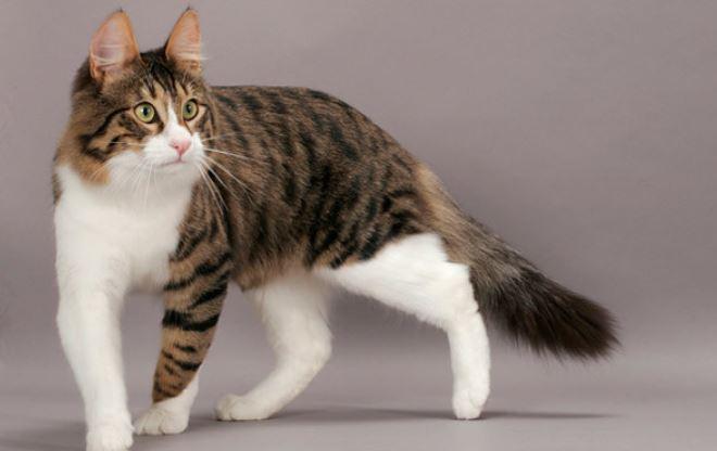 https: img.okezone.com content 2020 10 23 18 2298597 bunuh-kucing-hamil-dengan-air-mendidih-karyawan-perusahaan-keamanan-dipecat-I7osD0ZjB7.jpg