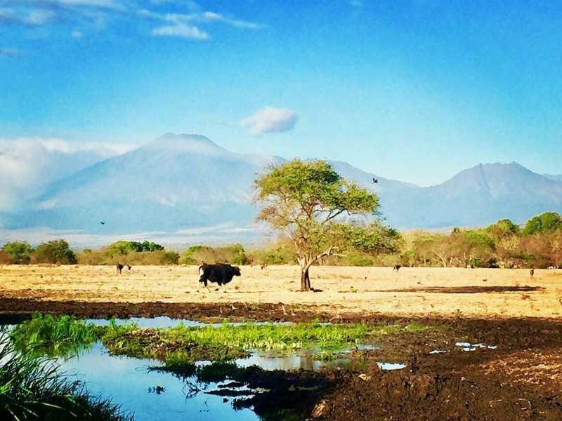 https: img.okezone.com content 2020 10 23 408 2298618 fakta-fakta-menarik-taman-nasional-baluran-afrikanya-indonesia-KymfZeNePX.jpg