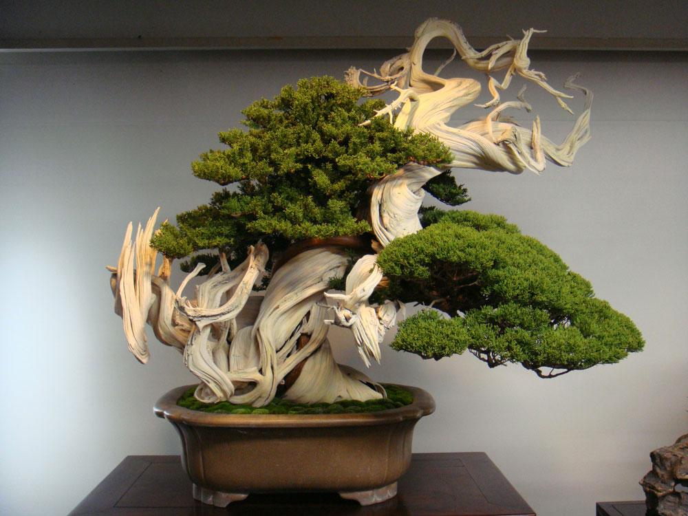 https: img.okezone.com content 2020 10 23 455 2298283 budidaya-bonsai-dan-jualan-online-untungnya-enggak-ngebohongin-nE04iA7eD2.jpg