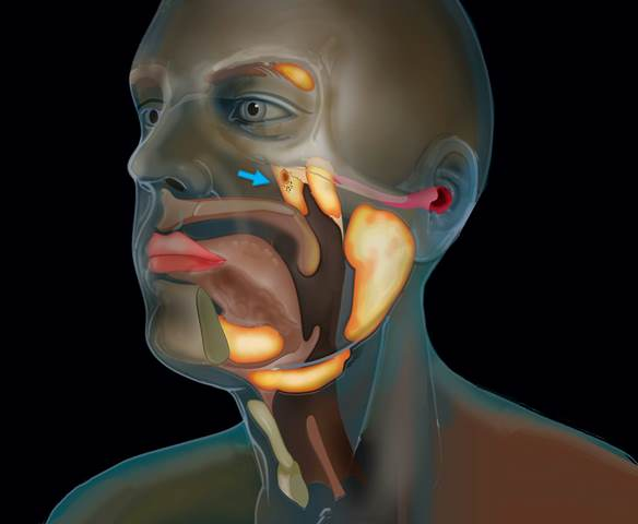 https: img.okezone.com content 2020 10 24 16 2298855 ilmuwan-temukan-organ-baru-di-kepala-manusia-LVf1DqAxUg.jpg