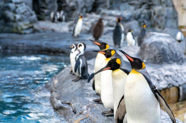 https: img.okezone.com content 2020 10 25 16 2299404 ternyata-penguin-kehilangan-indera-perasa-ini-penyebabnya-qSPWtslRwP.jpg