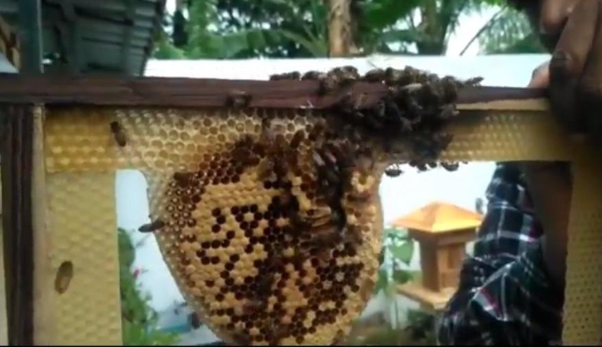 https: img.okezone.com content 2020 10 27 455 2300292 beternak-lebah-trigona-bisnis-menjanjikan-di-tengah-corona-WXVtKOOTG7.jpg