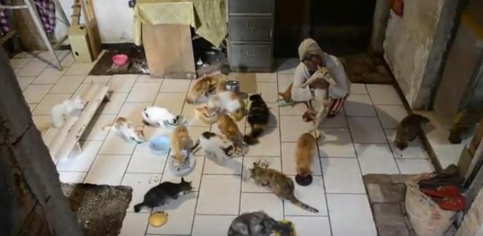 https: img.okezone.com content 2020 10 27 525 2300183 kisah-janda-tua-makan-dan-tidur-bersama-90-ekor-kucing-liar-Tv06XoF4ah.jpg