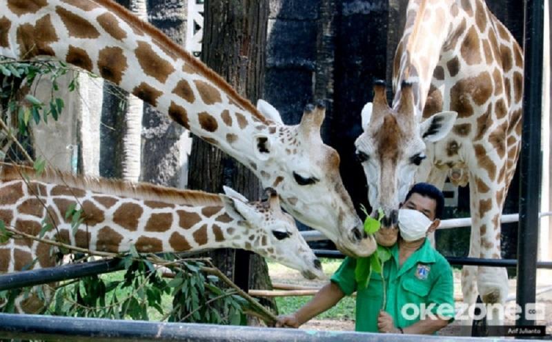 https: img.okezone.com content 2020 10 29 406 2301270 libur-maulid-nabi-1-000-lebih-wisatawan-kunjungi-taman-margasatwa-ragunan-2ROKxlQabo.jpg