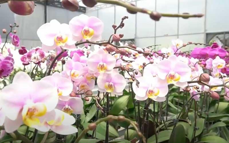 https: img.okezone.com content 2020 10 31 408 2301970 terpesona-anggrek-di-taman-bali-tempatnya-mirip-botanical-garden-singapore-nCY4nNFgoX.jpg