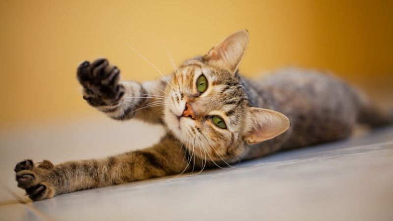 https: img.okezone.com content 2020 11 01 16 2302266 tahukah-anda-kucing-bisa-tidur-16-hingga-20-jam-sehari-VlbHsDghZ1.jpg