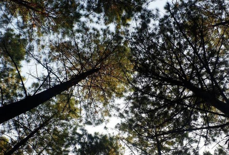 https: img.okezone.com content 2020 11 02 301 2302573 nikmatnya-menyantap-nasi-purakan-dengan-suasana-hutan-pinus-mojokerto-qBcBGr5ZC6.JPG