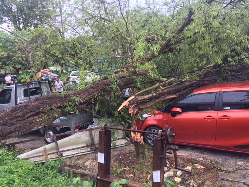 https: img.okezone.com content 2020 11 02 338 2303015 masuk-musim-hujan-warga-bogor-diimbau-waspada-pohon-tumbang-9N6COK0gZ3.jpg