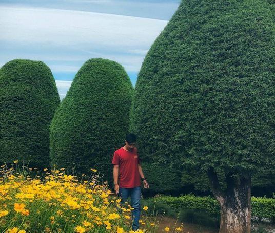 https: img.okezone.com content 2020 11 02 408 2302786 jalan-jalan-ke-ciwidey-ada-pohon-cemara-berbentuk-jamur-lho-blBiewP27P.JPG