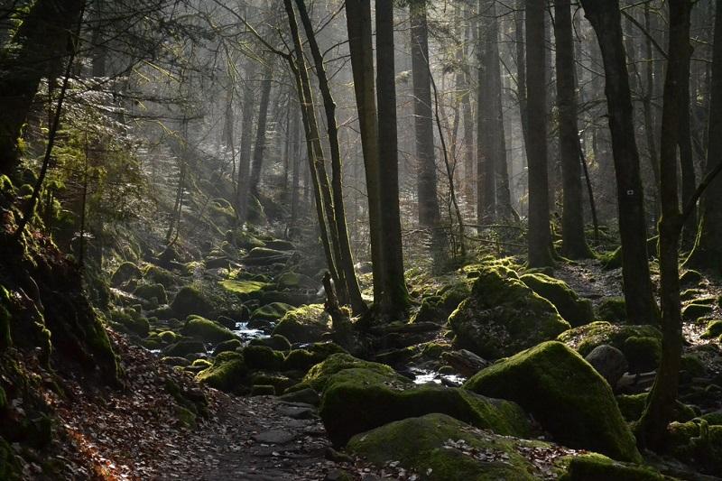 https: img.okezone.com content 2020 11 03 320 2303486 ri-perlu-restorasi-ekosistem-demi-pulihkan-hutan-ini-alasannya-Fas2Qnmuxb.jpg