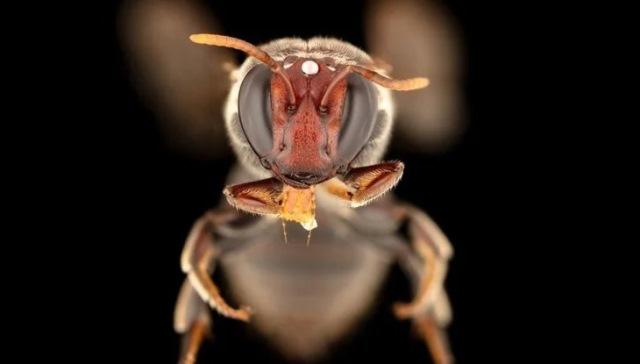 https: img.okezone.com content 2020 11 04 16 2304135 ilmuwan-terkejut-temukan-lebah-cari-makan-di-malam-hari-dYm36cHZLX.jpg