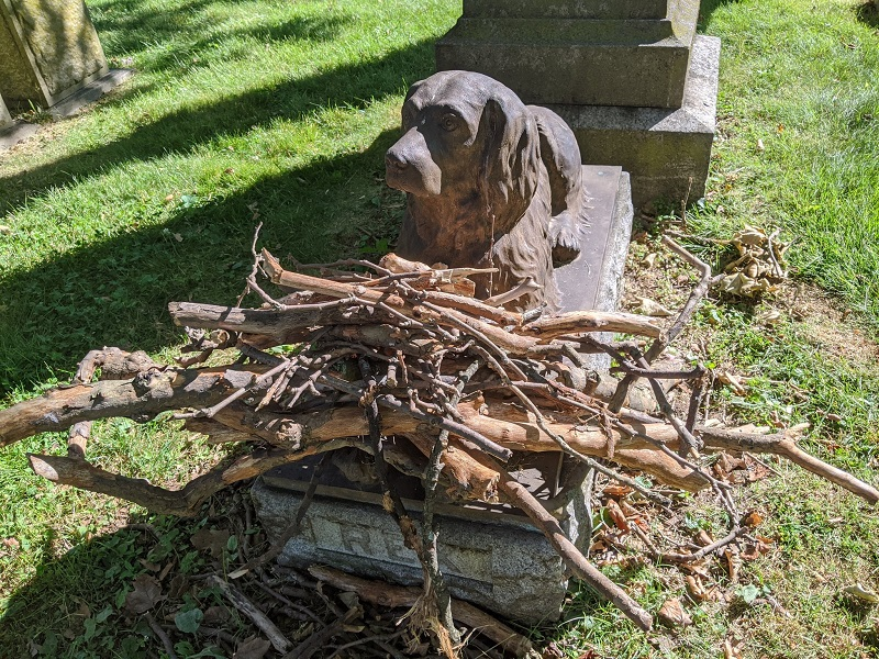 https: img.okezone.com content 2020 11 04 612 2303949 kisah-makam-anjing-berusia-100-tahun-teman-setia-pedagang-buah-f2gmBtN8o2.jpg