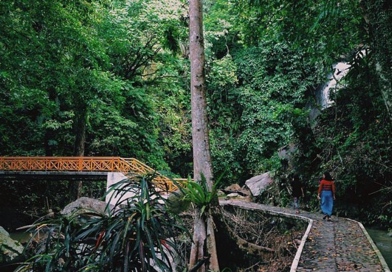 https: img.okezone.com content 2020 11 05 406 2304757 lampung-gali-potensi-wisata-hutan-demi-tarik-wisatawan-6drhHskoL9.JPG