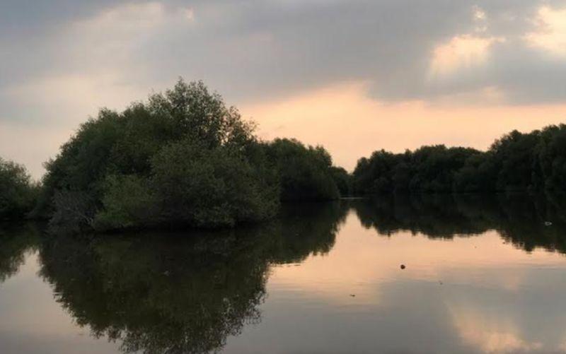 https: img.okezone.com content 2020 11 05 408 2304675 bosan-wfh-yuk-melepas-penat-di-hutan-mangrove-pik-6ggnP7u9Oh.jpg