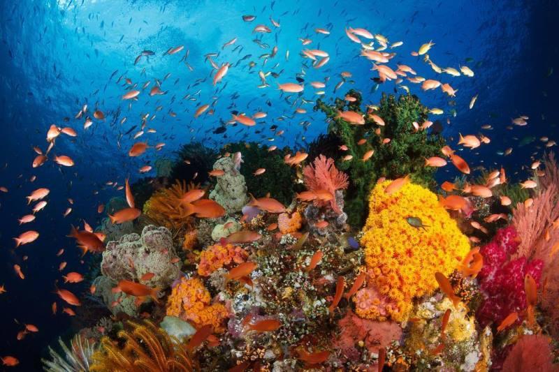 https: img.okezone.com content 2020 11 06 408 2305446 intip-keunikan-3-cagar-biosfer-baru-indonesia-yang-ditetapkan-unesco-dF5B04bQyE.jpg