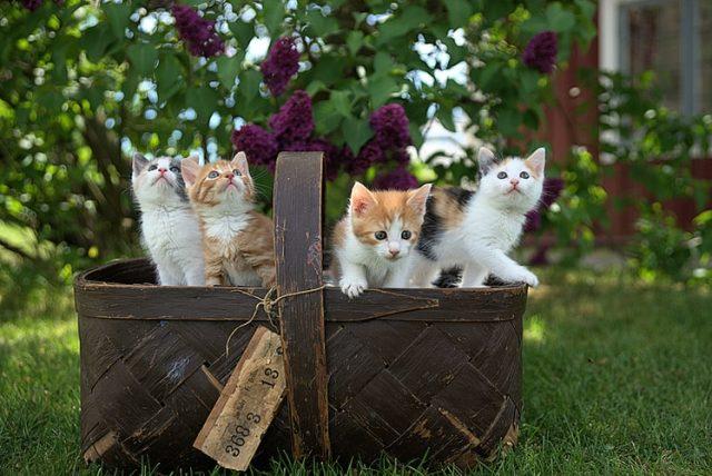 https: img.okezone.com content 2020 11 09 16 2306939 ini-penyebab-kucing-mendekat-saat-namanya-dipanggil-7P6RrUL4At.jpg