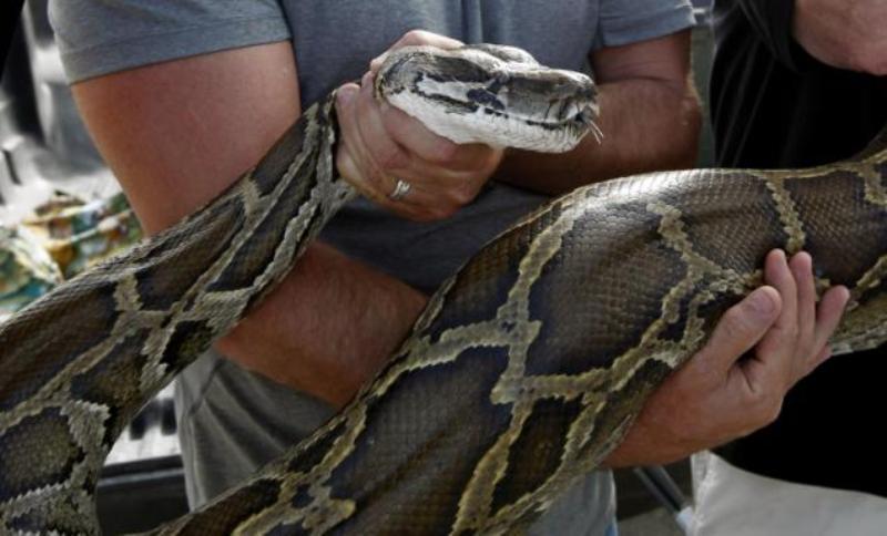 https: img.okezone.com content 2020 11 09 338 2306860 saluran-air-di-pasar-minggu-tersumbat-saat-dicek-penyebabnya-ular-sanca-hiBBBm5RrM.jpg