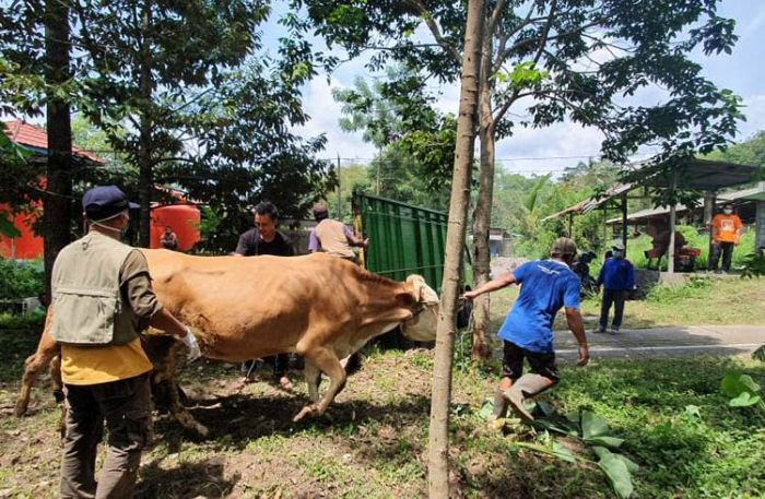 https: img.okezone.com content 2020 11 09 510 2306609 warga-lereng-gunung-merapi-berbondong-bondong-evakuasi-ternak-WRNwvYpdLH.jpg