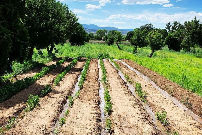 https: img.okezone.com content 2020 11 12 408 2308535 pulas-garden-agrowisata-dan-pusat-edukasi-tanaman-obat-di-banjarnegara-ayusRbAn9v.JPG