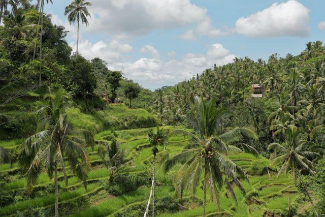 https: img.okezone.com content 2020 11 13 16 2309134 punya-kekayaan-alam-melimpah-biodiversitas-indonesia-perlu-dilestarikan-GRU01gn4Pt.jpg
