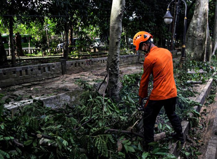 https: img.okezone.com content 2020 11 14 338 2309606 antisipasi-banjir-sudin-pertamanan-hutan-utamakan-relokasi-pohon-ro6VGRiIsR.jpg