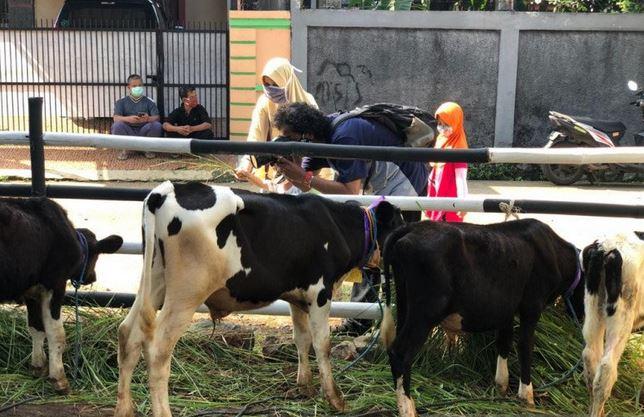 https: img.okezone.com content 2020 11 15 408 2309782 serunya-belajar-beternak-sambil-memerah-susu-sapi-di-peternakan-cipayung-mgEofKNhOj.JPG