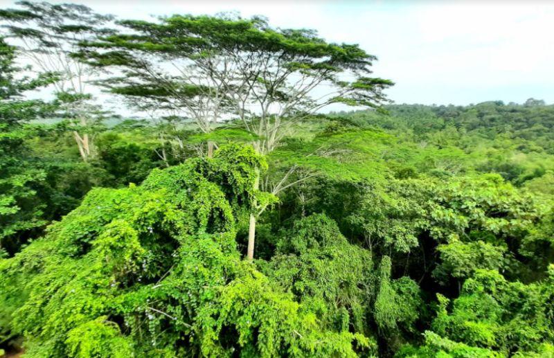 https: img.okezone.com content 2020 11 17 549 2311309 mau-jelajahi-hutan-borneo-ini-4-modal-pentingnya-sTisouTigu.jpg