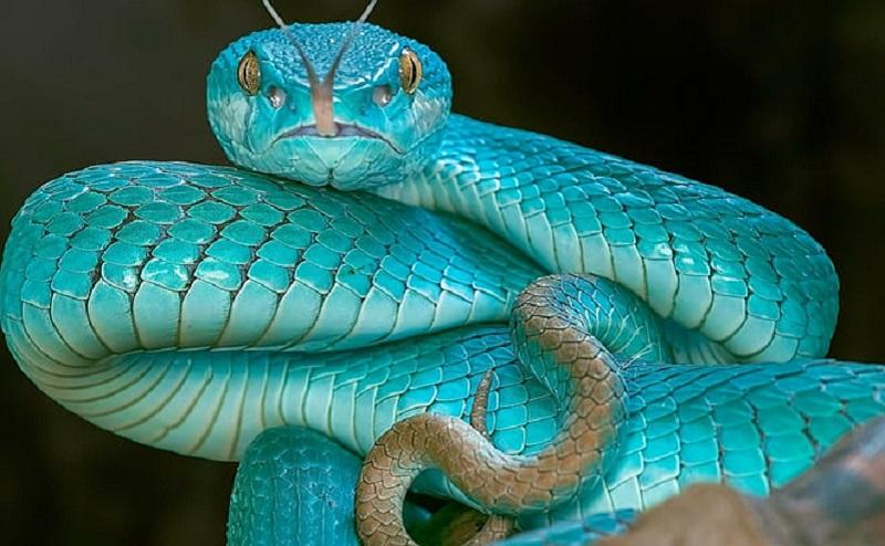 https: img.okezone.com content 2020 11 17 612 2310944 5-jenis-ular-yang-aman-dipelihara-pemula-8kBDg8DnV8.jpg