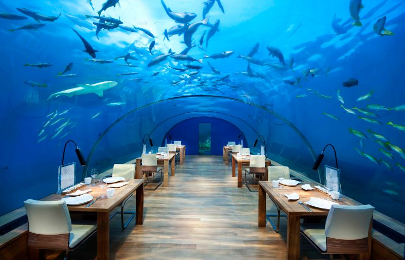 https: img.okezone.com content 2020 11 18 298 2311639 di-restoran-ini-anda-menikmati-makanan-sambil-memacu-adrenalin-berani-wS1AhJztVO.jpg