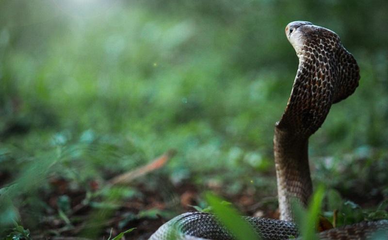 https: img.okezone.com content 2020 11 18 481 2311418 5-manfaat-ular-di-bidang-kesehatan-apa-saja-8n7qZ1d1cB.jpg