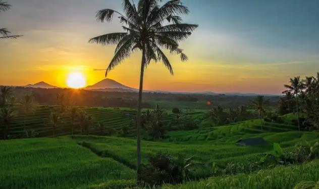 https: img.okezone.com content 2020 11 19 25 2312182 sport-tourism-di-jatiluwih-atraksi-seru-bareng-keluarga-gqXaGfi8p9.jpg