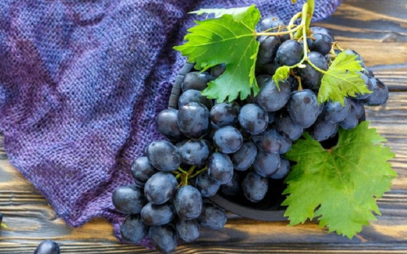 https: img.okezone.com content 2020 11 19 298 2312176 anggur-hitam-tak-cuma-lezat-ini-5-manfaatnya-yang-perlu-diketahui-izdiIqRJLd.jpg