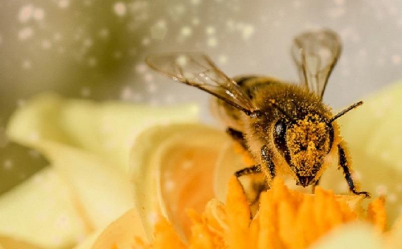 https: img.okezone.com content 2020 11 19 613 2312465 keutamaan-lebah-dalam-surat-an-nahl-bisa-menghasilkan-madu-warna-warni-Trnh11UgSr.jpeg
