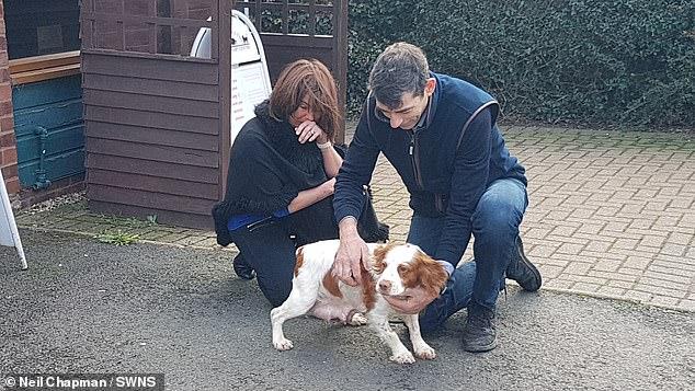 https: img.okezone.com content 2020 11 23 18 2314420 mengharukan-6-tahun-dicuri-anjing-bertemu-kembali-dengan-pemiliknya-unzoCVqI4b.jpg