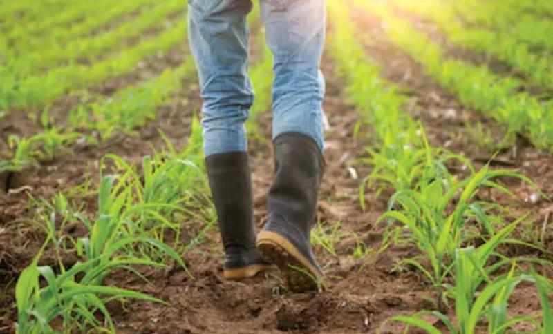 https: img.okezone.com content 2020 11 23 455 2314738 jadi-petani-milenial-ini-keuntungan-dan-tantangannya-4DFJTK4qdO.jpg