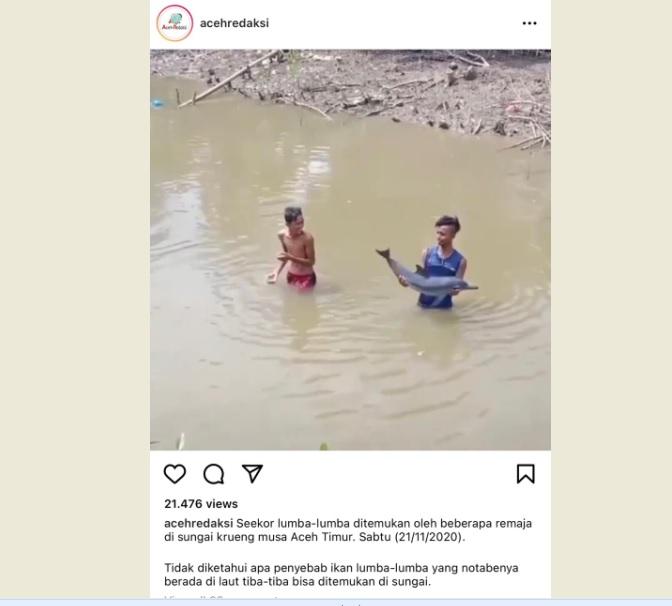 https: img.okezone.com content 2020 11 24 340 2315114 viral-lumba-lumba-nyasar-ke-sungai-hebohkan-warga-aceh-3DBhFk2Jl3.jpg