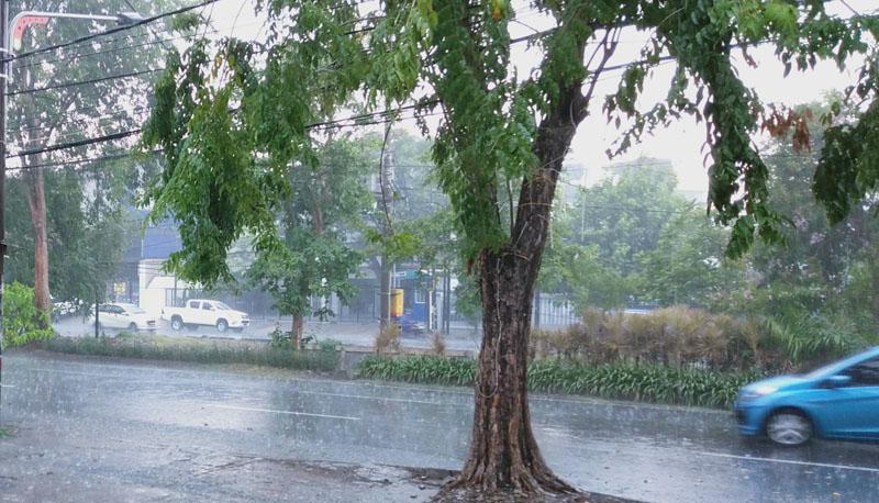 https: img.okezone.com content 2020 11 24 519 2315133 hujan-deras-disertai-angin-waspada-pohon-tumbang-J5TrHLzzhg.jpg