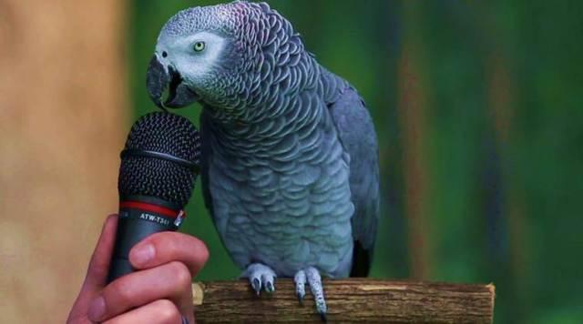 https: img.okezone.com content 2020 11 24 612 2315527 bisa-ucapkan-200-kata-burung-kakatua-einstein-bikin-heran-ilmuwan-i51wJgvDzR.jpg
